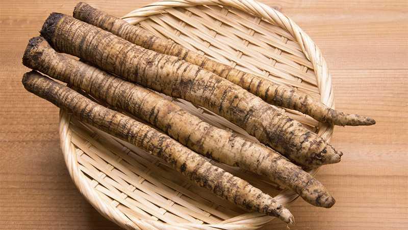 Prawidłowe trawienie a korzeń łopianu - Biolit
