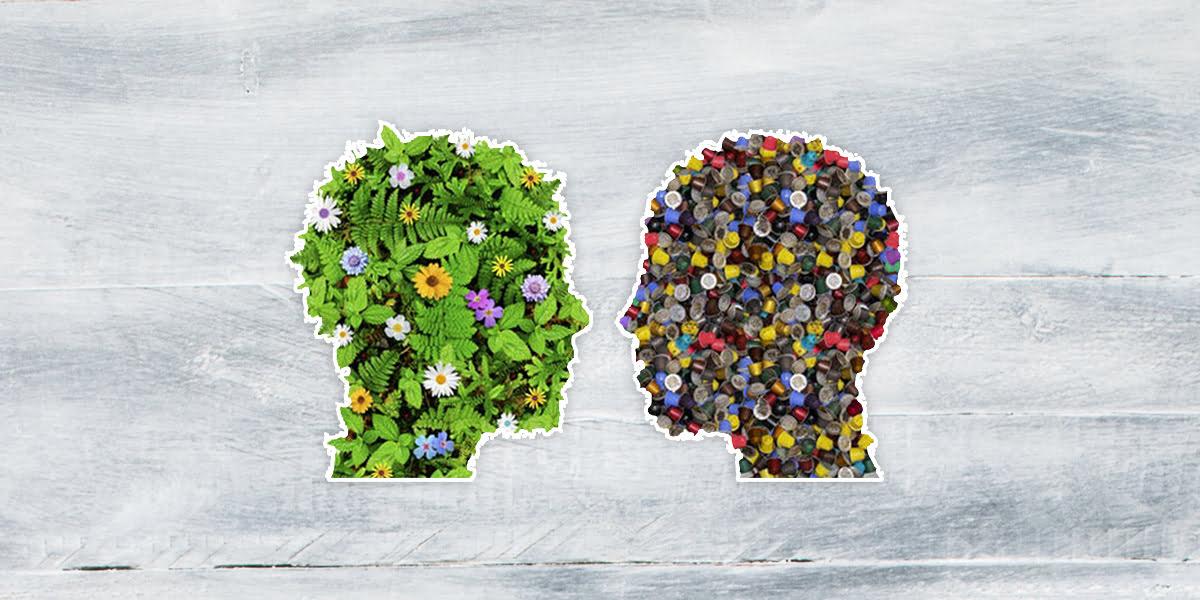 Jak oczyścić organizm z toksyn? - Biolit